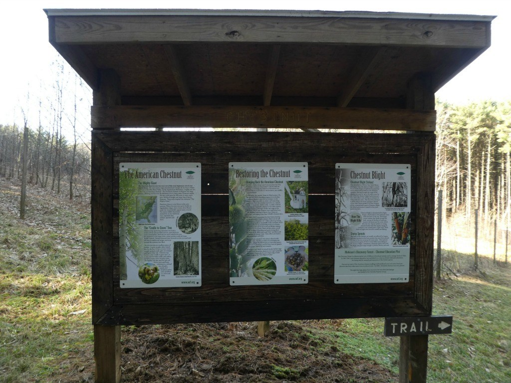Chestnut Kiosk at the Discovery Forest Trail