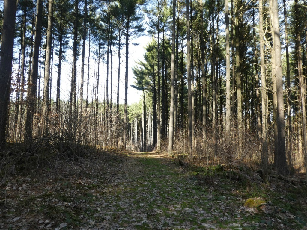 Discovery Forest Trail