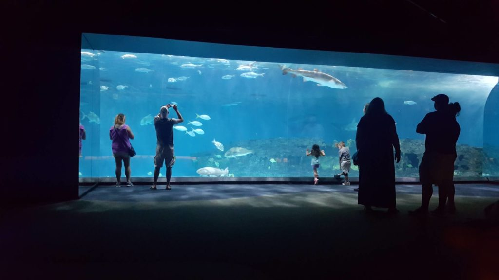 The North Carolina Aquarium on Roanoke Island has the largest shark exhibit in the state.