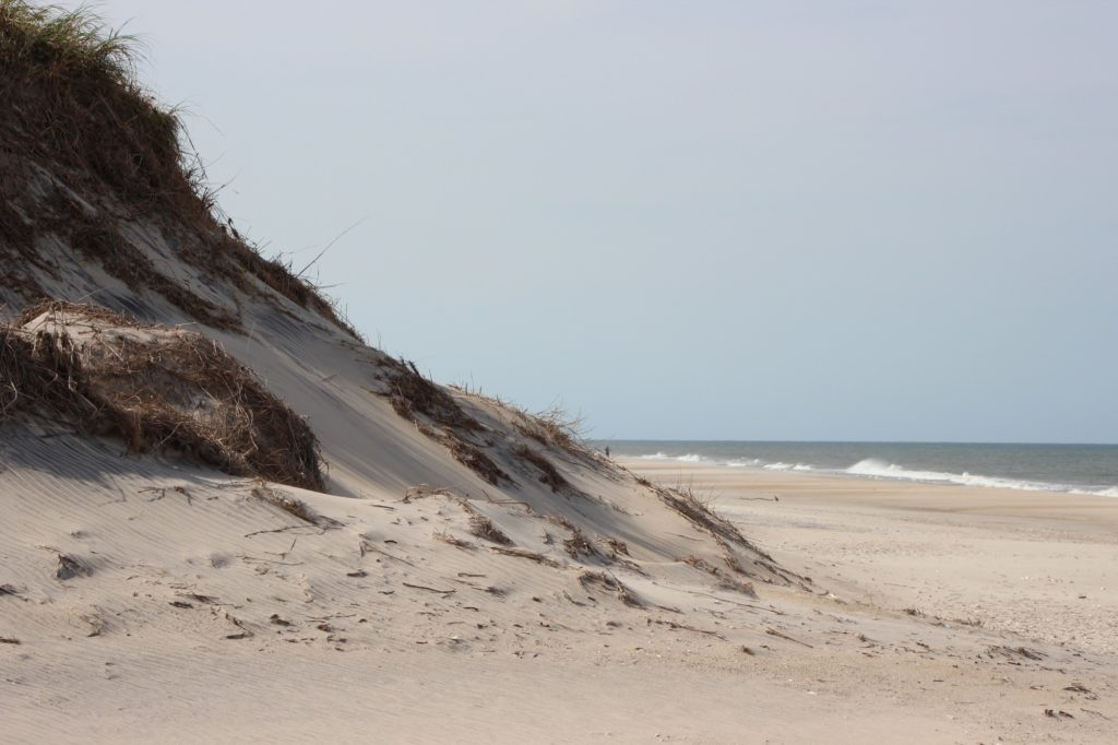 Sand dunes found along Cape Hatteras National Seashore.