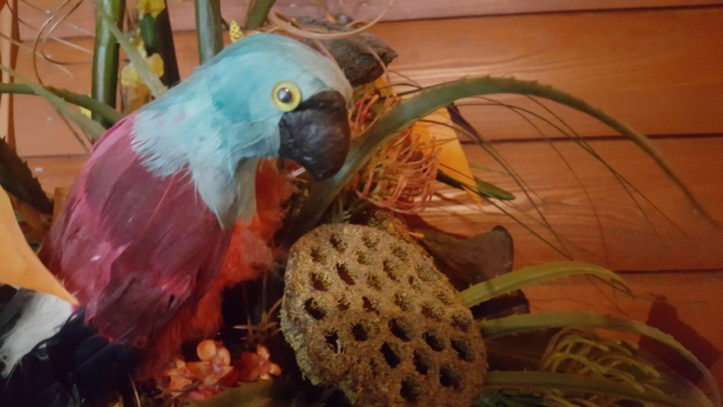 Some of the parrot decor in the Parrot Paradise cabin at Serenity Springs.