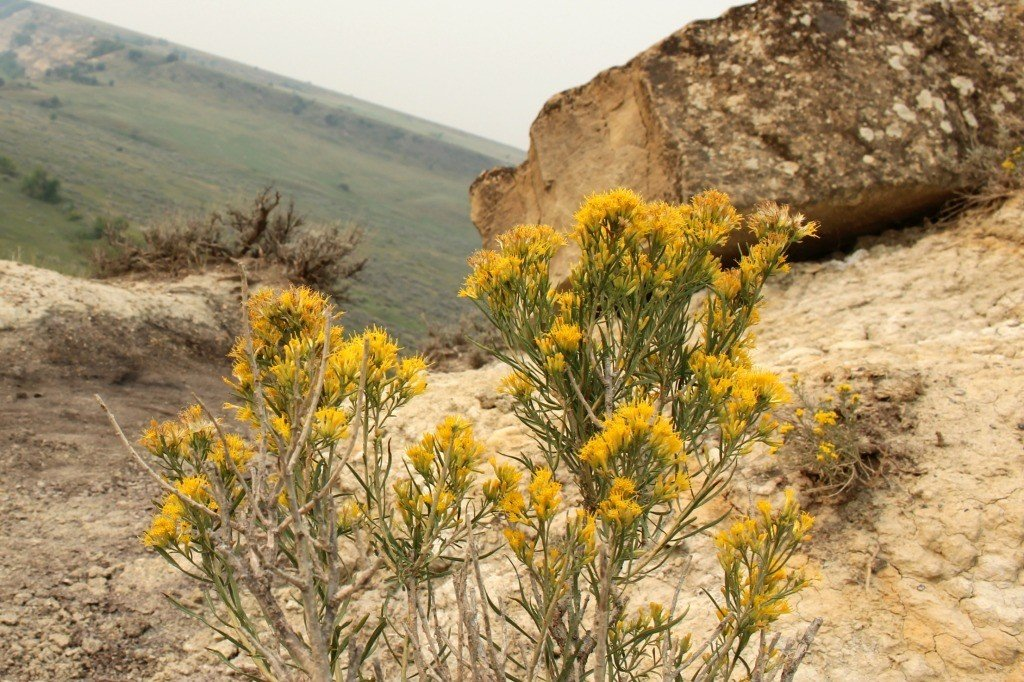 A glimpse of color in the badlands