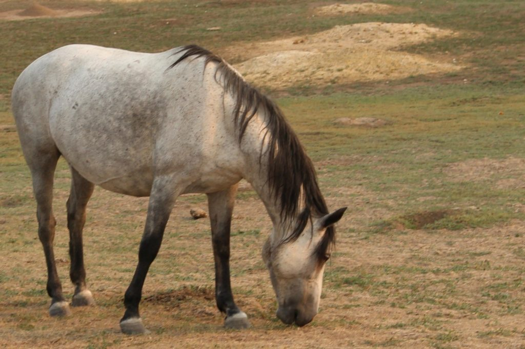 A horse in the Badlands