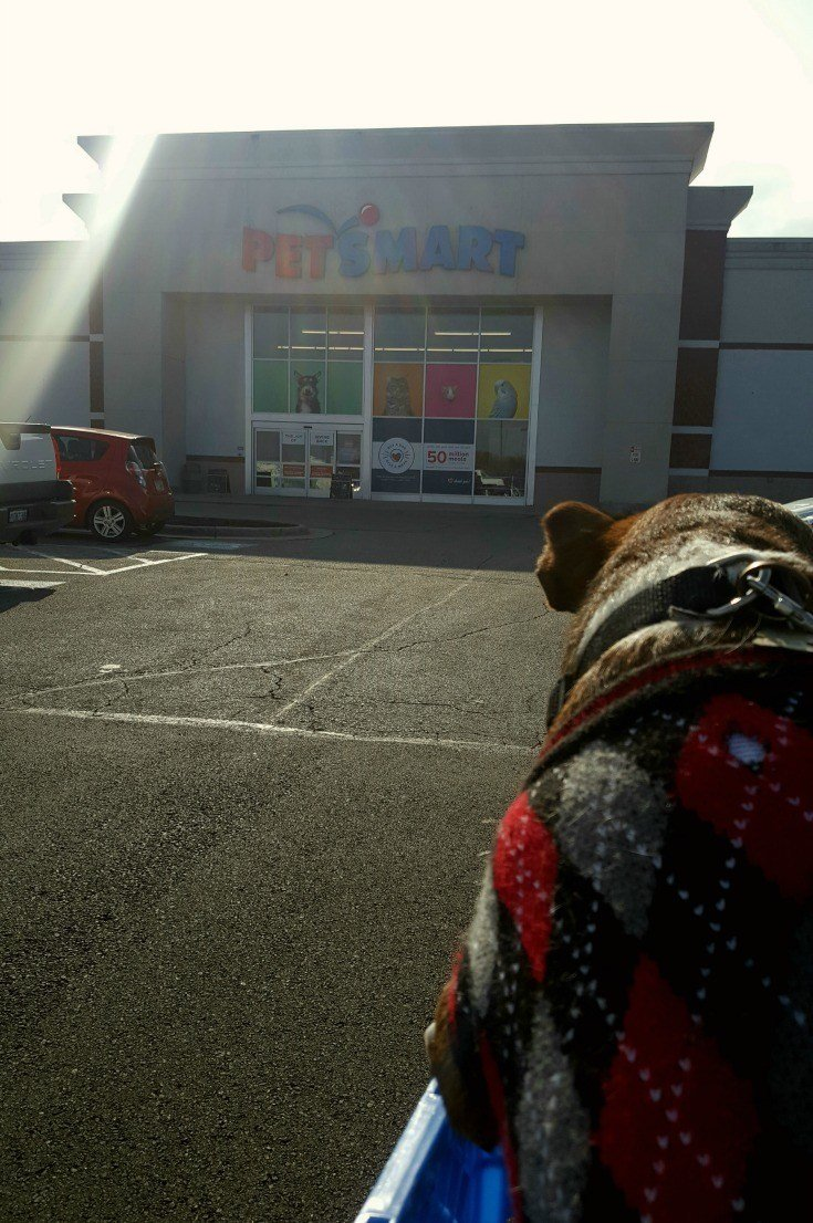 on the way in to PetSmart