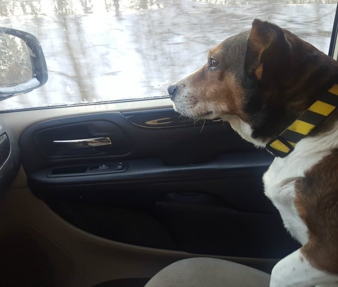 12 Tips to make a Long Road Trip with your Dog Easy