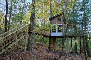 treehouse in a wooded setting