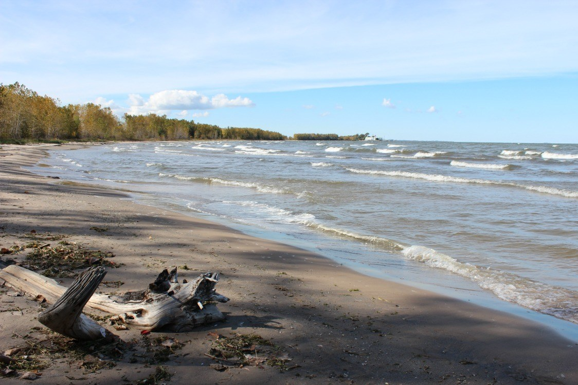 sheldon marsh in sandusky