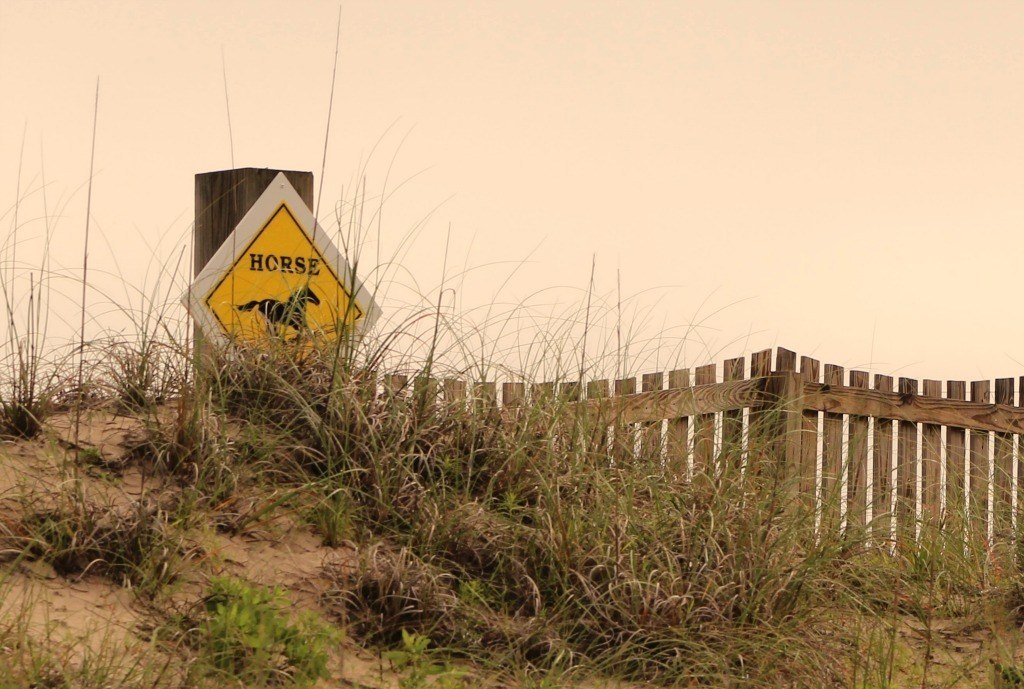 Horse crossing sign along the 4x4 beach