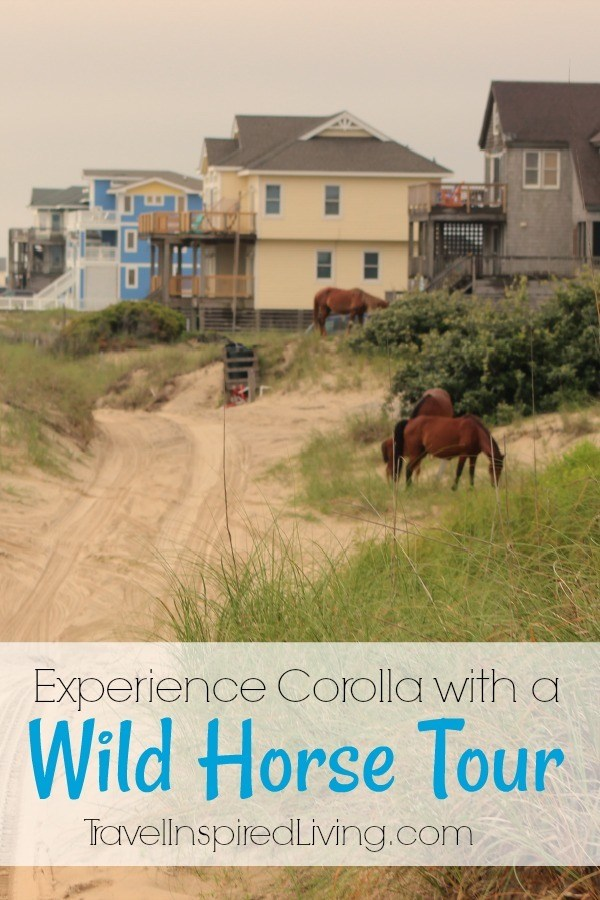 If you're looking for things to do in the Outer Banks, I suggest you experience Corolla with a wild horse tour with Corolla Outback Adventures.