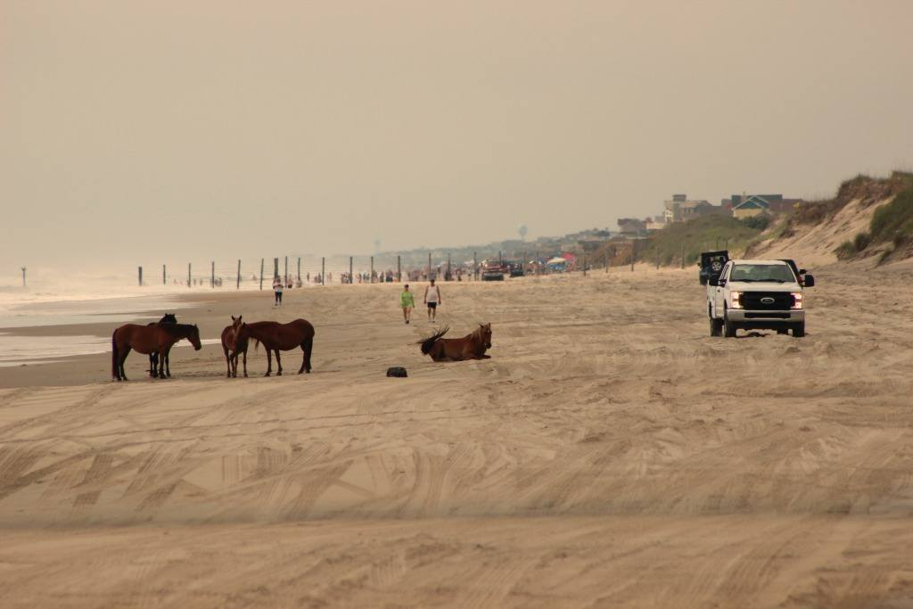 The 4x4 Beach in Corolla with wild horses