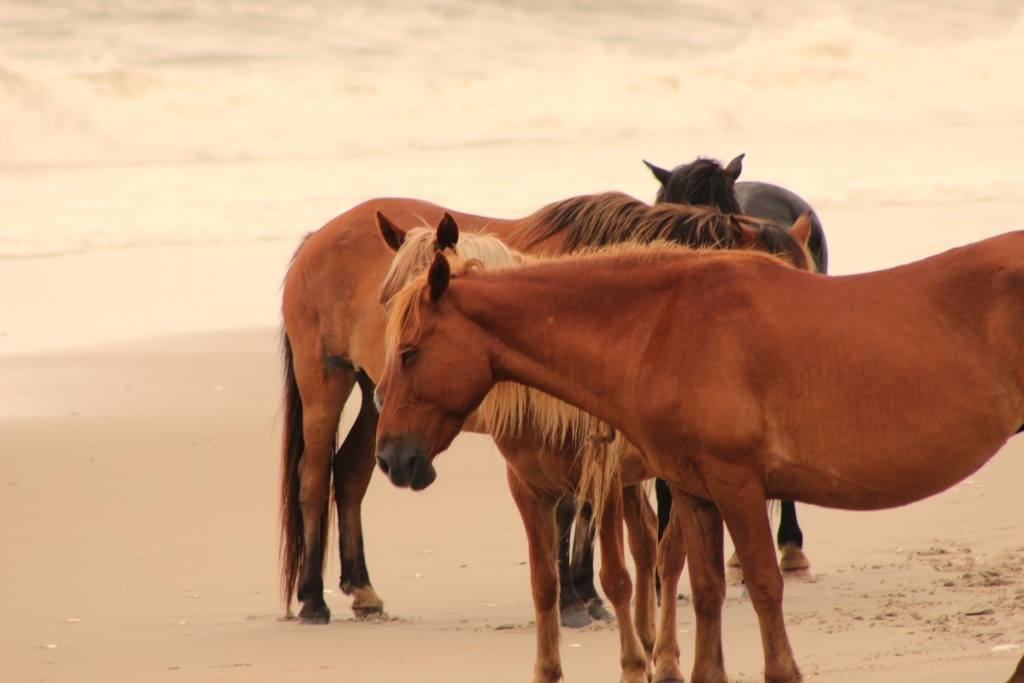 horse harem by the ocean
