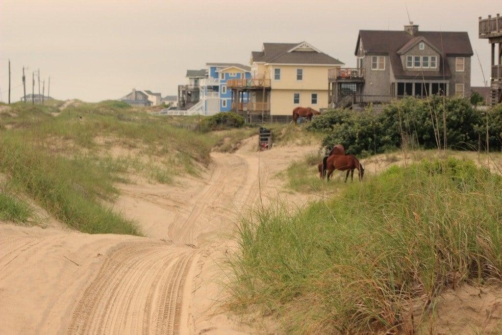 horses near the vacation homes