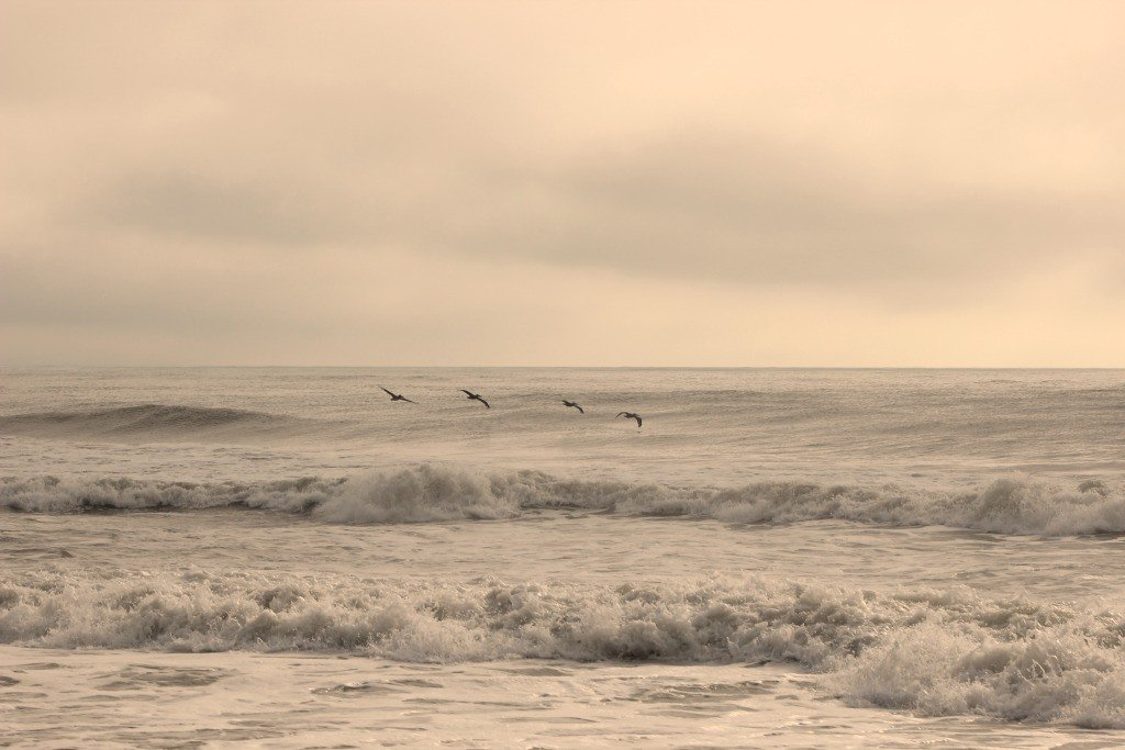 pelicans flying over the ocean in corolla outer banks
