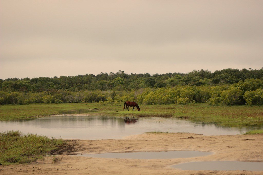 single horse in the pasture