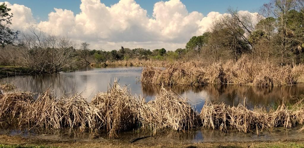 Ibis Pond Pinckney