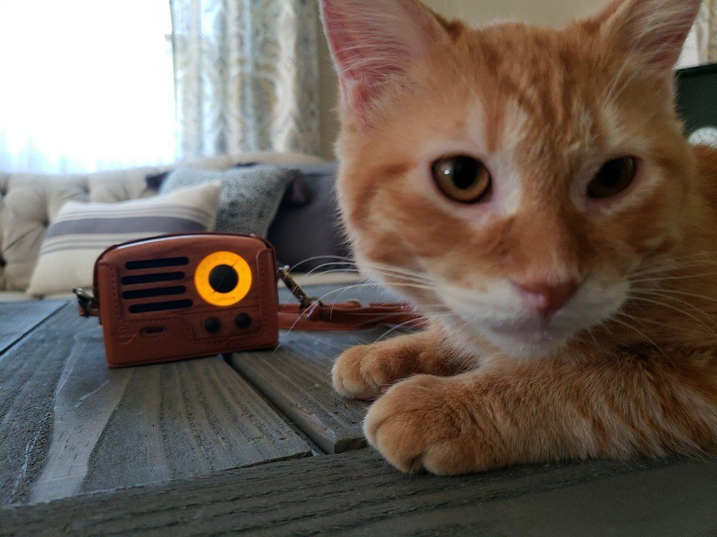 Finnley and my radio