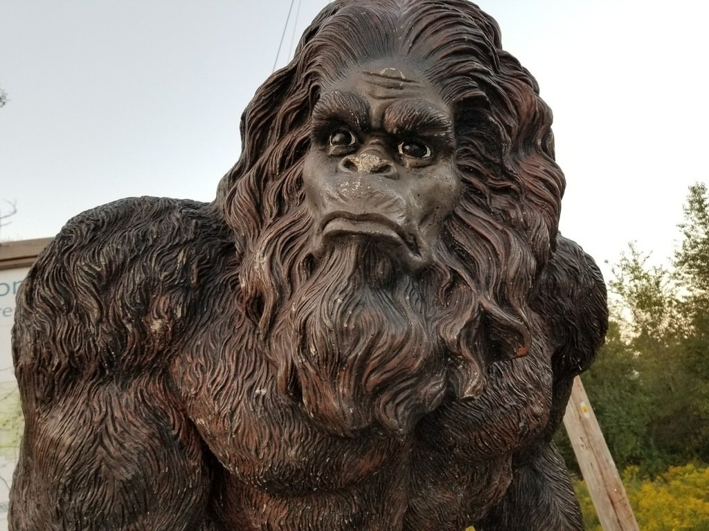 Bigfoot! Spotted in Shawnee National Forest!