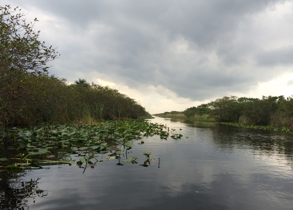 Checking out the Everglades in Florida