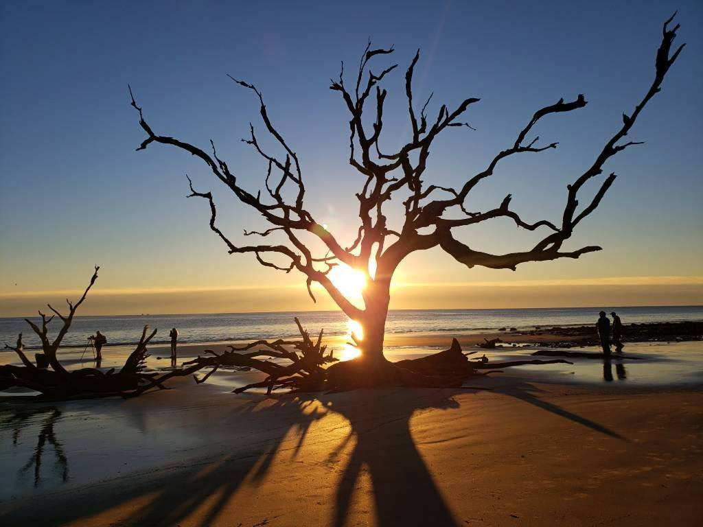 Driftwood Beach tree at sunrise