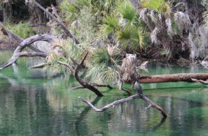 We were looking for manatees but ended up spotting birds instead. Bird Watching in Florida's State Parks
