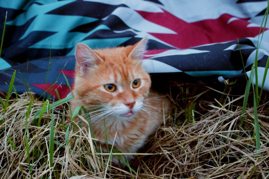 A fuzzy orange cat peeking out from under a Kachula blanket.