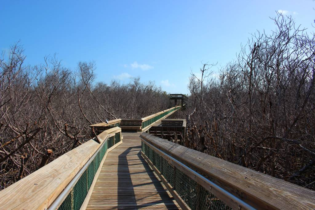 A boardwalk through mangroves.