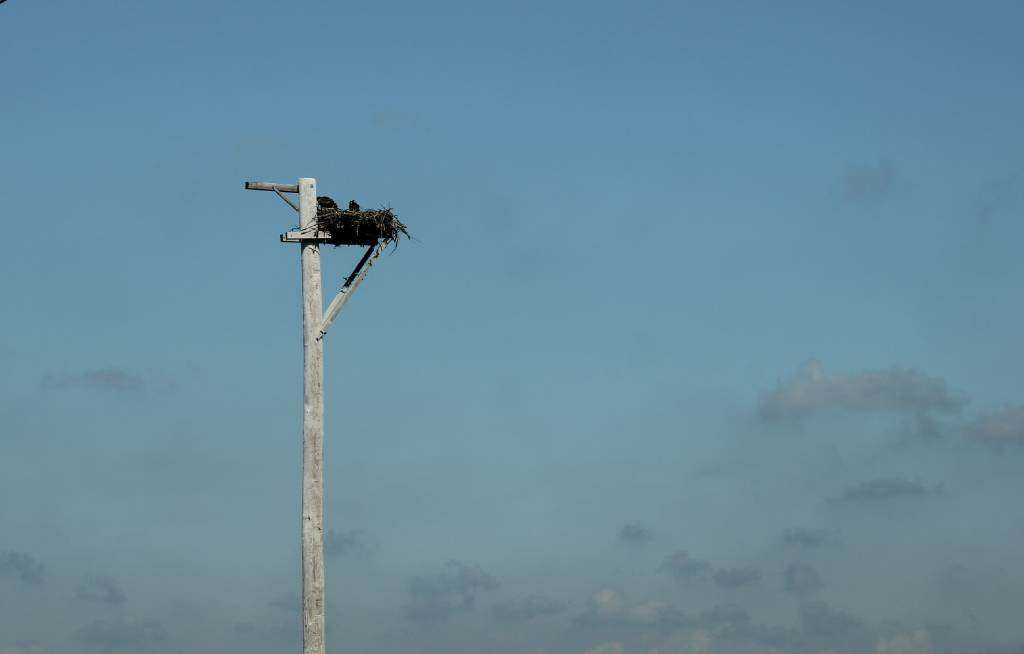 an osprey nest on top of a telephone pole