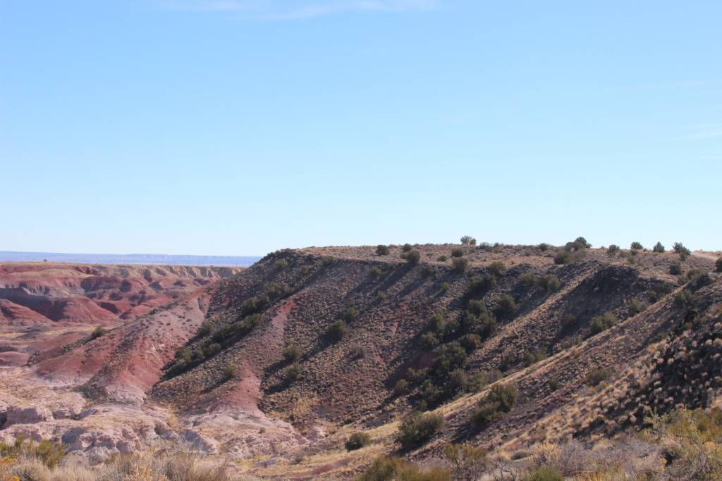 The petrified forest in Arizona