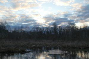 A wetland look at the wayne national forest