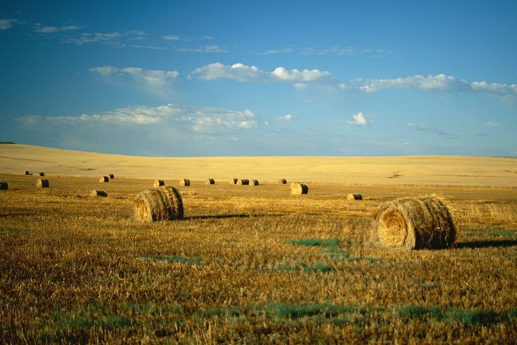 A field of hay during harvest time in North Dakota.
