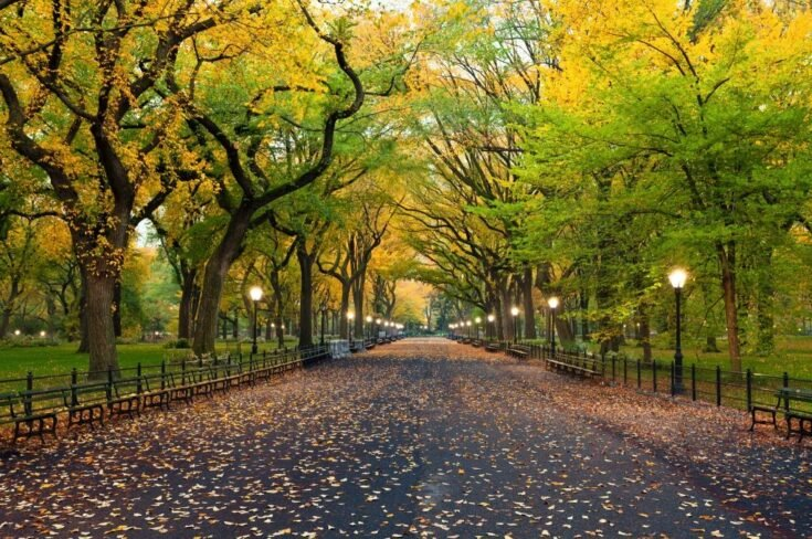 Experience Central Park with a Local