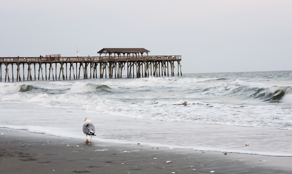 A sea gull walks on a sandy beach on the edge of the ocean with a pier in the background.