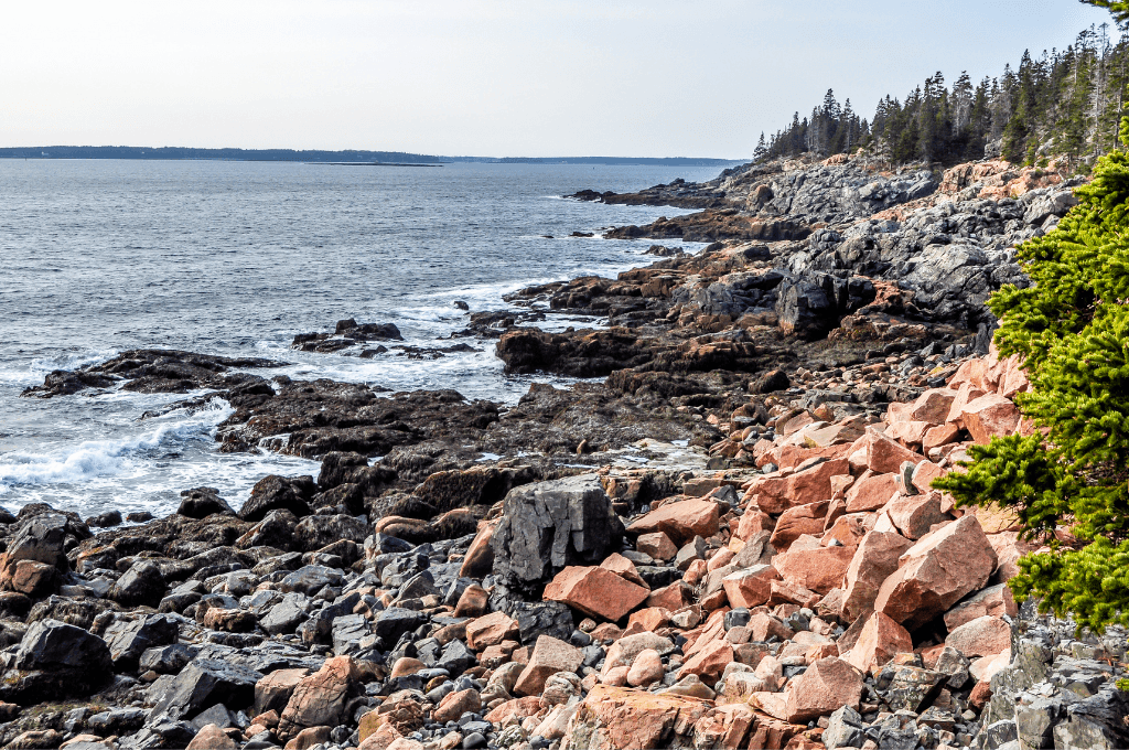 The shoreline in Acadia national park
