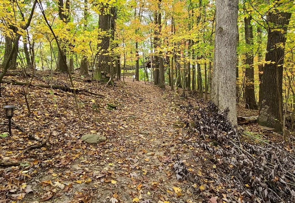 path throug the woods