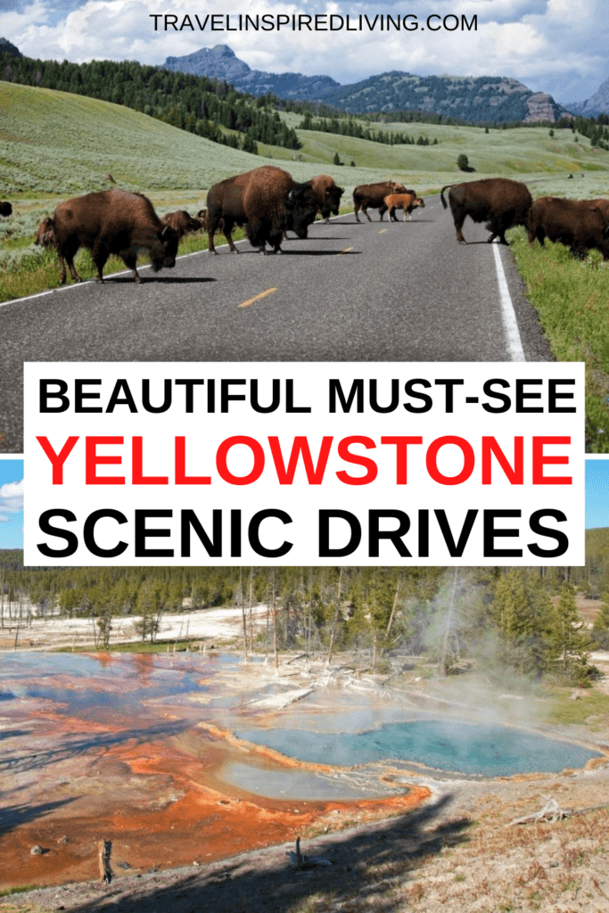 Buffalo crossing the road and a scenic view in Yellowstone.