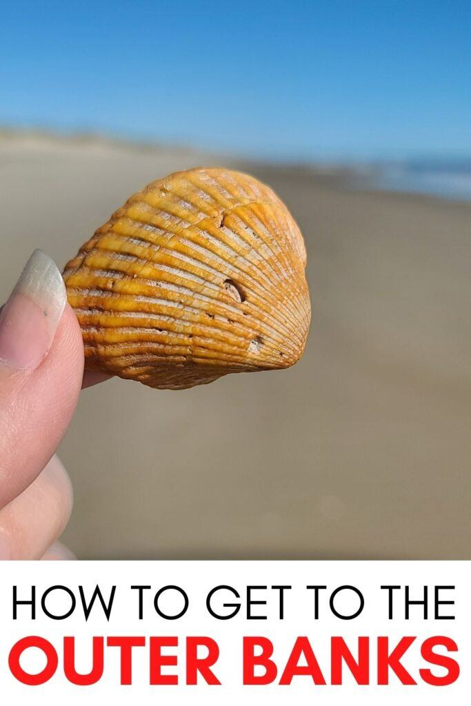 A seashell in the Outer Banks