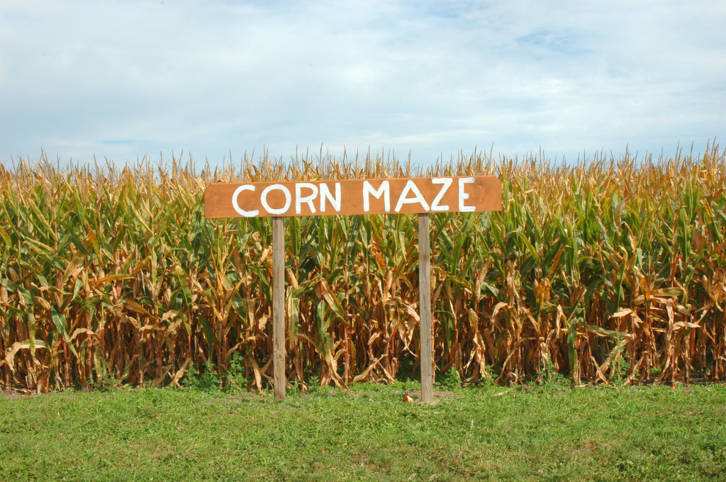 A field of corn with a sign that says Corn Maze