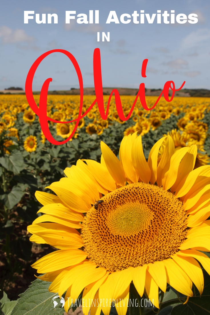 A field of sunflowers on a sunny day with a close-up of one sunflower with an ant crawling on it.