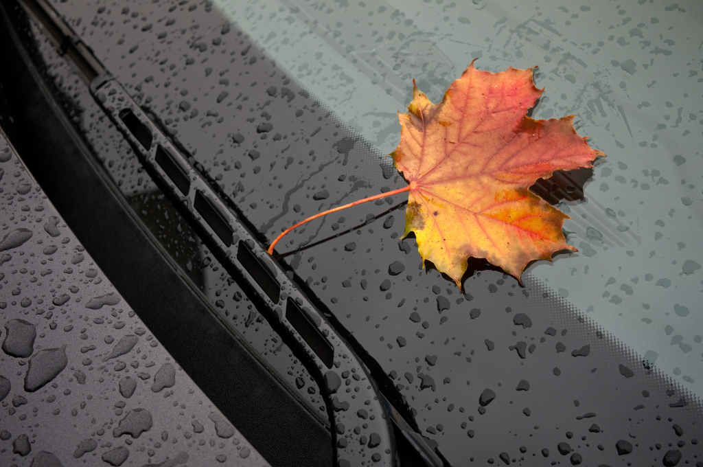 A single multi-colored leaf in hues of yellow, orange and red laying on a windshield.