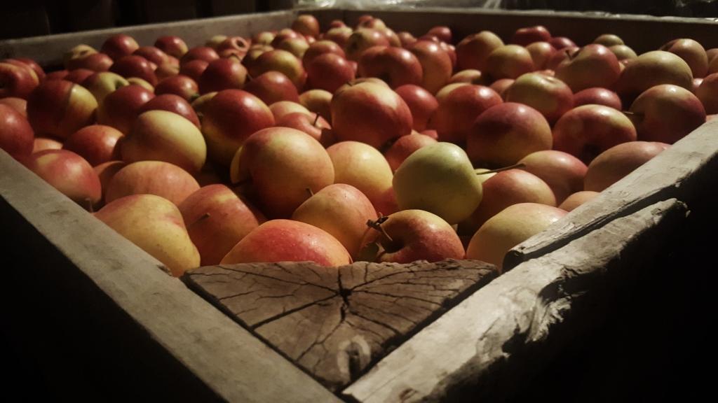 A bin of  ripe reddish yellow apples.
