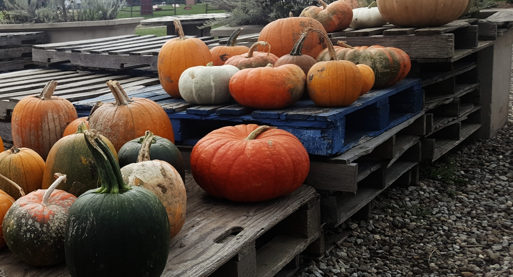 Pallets of different varieties and colors of pumpkins.